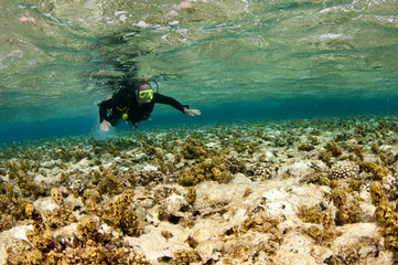 man scuba dives over coral reef