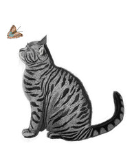 Butterfly and the Cat