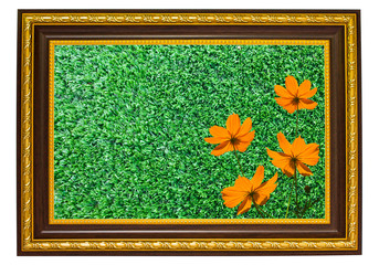 the orange flowers and green turf in wooden frame