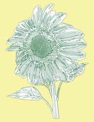 Sunflower Line Vector