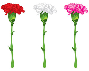 Coloured carnations