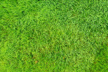 Natural green grass field