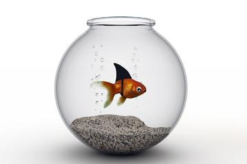 dangerous fish