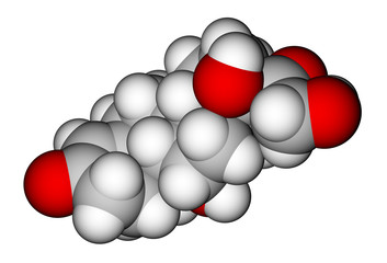 Cortisol space-filling molecular model
