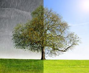 Rain vs Sun concept