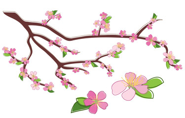 branch of peach with rosy flowers - vector