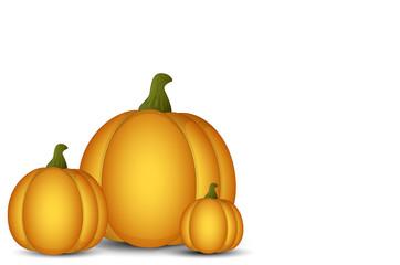 Vector Pumpkins on White Background