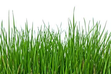 Grass on white background horizontal
