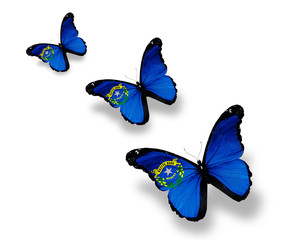 Three Nevada flag butterflies, isolated on white