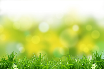 Grass and background