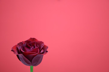 A single red rose on a bright pink background