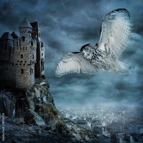 Fototapete Flying owl bird