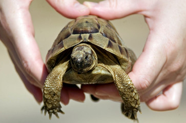 Wildlife Photos - Hands Hold a Turtle