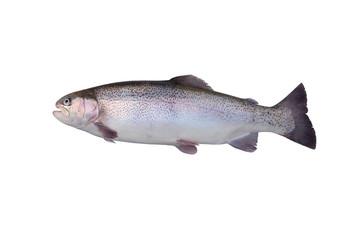 Fische 107