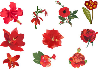 ten red flowers collection