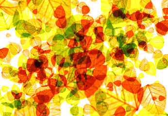 abstract structure background with autumn leaves