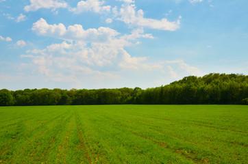 Grain in landscapes
