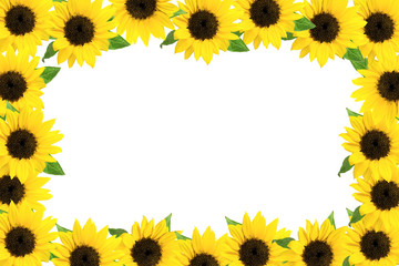 frame of the sunflower