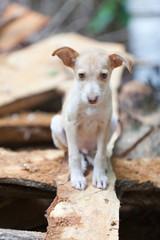 Homeless puppy-dog - Heimatloser junger Hund