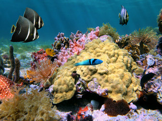 Colors of sea-life