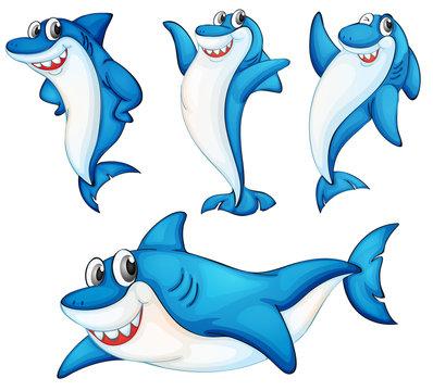 Shark series