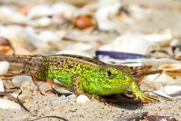 Bright green lizard