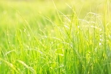 Bright green lush grass
