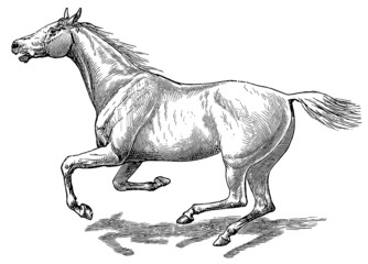 The style walk a horse. Full gallop