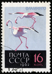 Flamingo. Postage stamp USSR