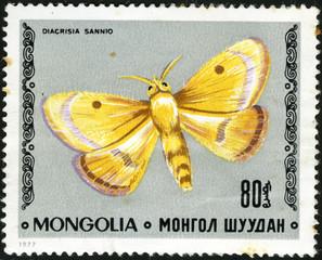 Butterfly Clouded Buff - Diacrisia sannio