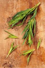 Französischer Estragon (Artemisia dracunculus)