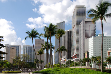 Canvas Prints Palm tree Miami