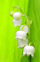 Spoed Fotobehang Macro lily