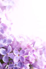 Foto auf Leinwand Flieder Art Spring lilac abstract background