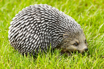 Hedgehog on a grass