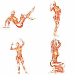 Female Human Body Anatomy Pack - 2of5