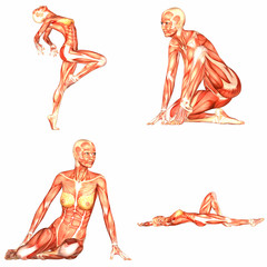 Female Human Body Anatomy Pack - 3of5