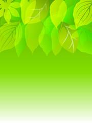 葉 背景 緑