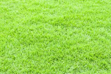 Green grass texture for web