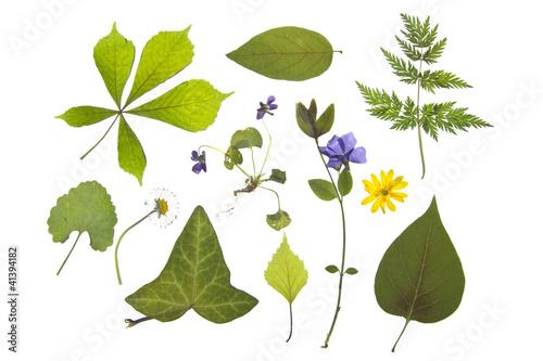 Herbarium Blätter verschiedene blätter und blumen stockfotos und lizenzfreie bilder