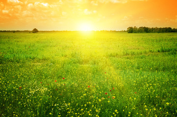 Wall Mural - Beautiful sunset on a spring field