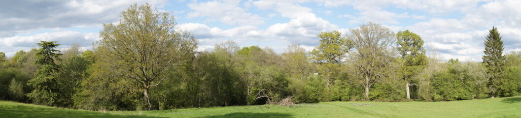 Panoramic View of Trees in Spring