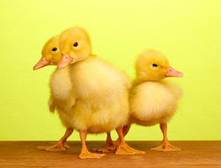 Duckling on wooden table on green background