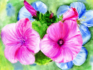 watercolors, rose and blue flowerses