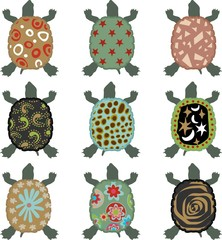 Safari Turtle