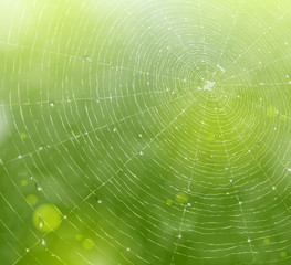 Web of natural background
