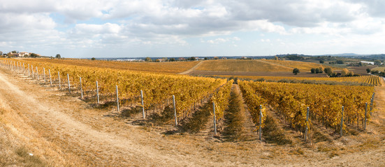 cool vineyard in autumn under cloudy sky