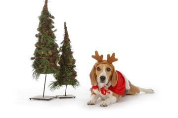 chien beagle en père noël