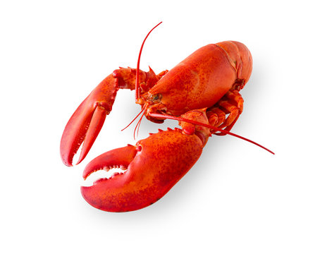 Isolated lobster on white