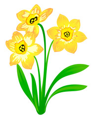 Vector narcissus, isolated on white